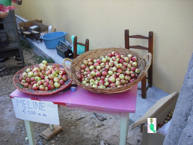 Gavoi apples