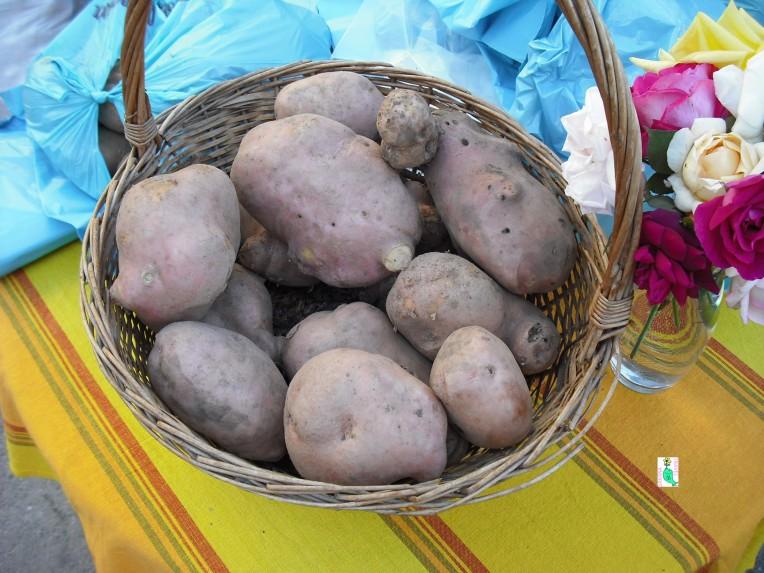 Potatoes of Gavoi