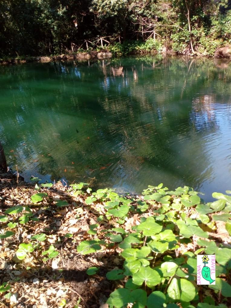 Parco Aymerich Laconi Pond details