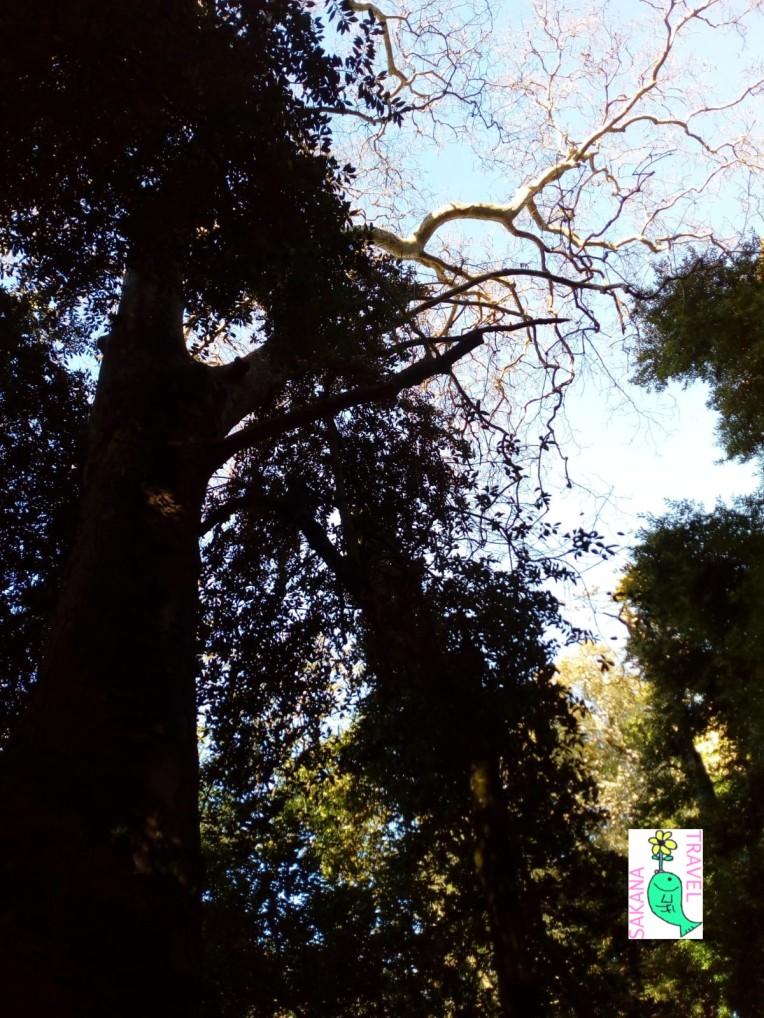 Parco Aymerich Trees Laconi Sakanatravel